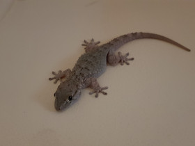 A lizard in the living room