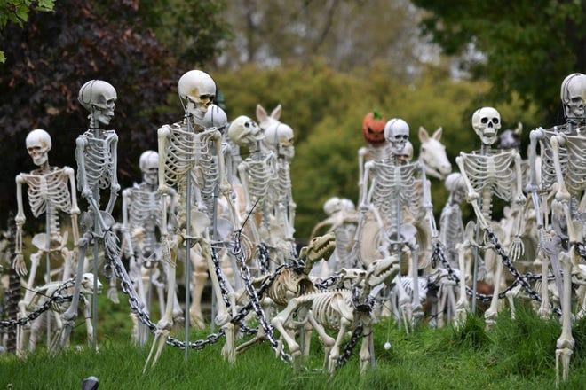 10ada39c-83d9-4ed6-9692-65d7bcd39a8d-skeleton.JPG?width=660&height=440&fit=crop&format=pjpg&auto=webp